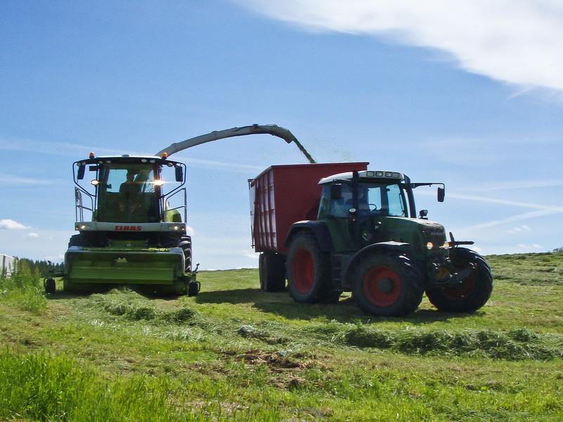 Grashøsting-2