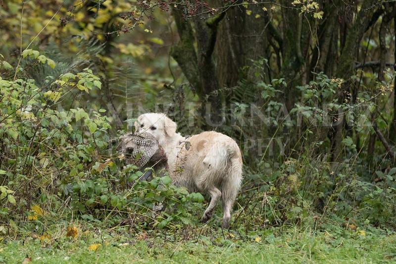 Dogs-4673.jpg
