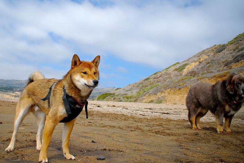 dogs_beach-059.jpg