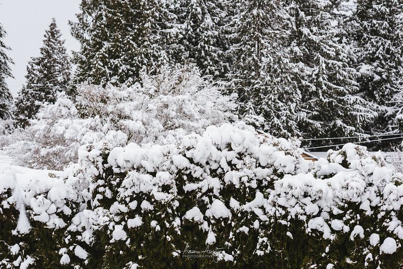 SnowWedgwoodFeb2019-6.jpg