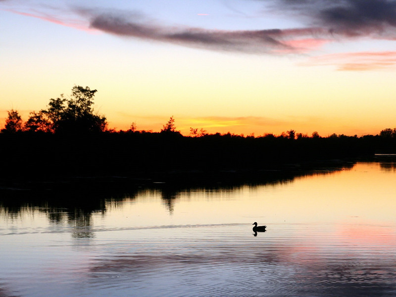 sunset_duck_01_10212007.jpg