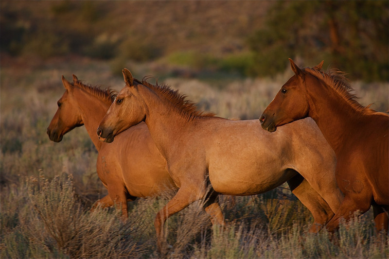 Wild horses roam the uplands above Big Goose Lake