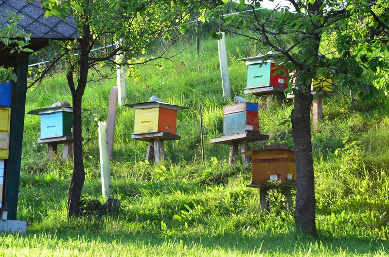 Bee Houses. Turisti