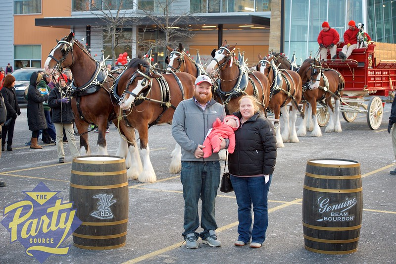 Clydesdale Portraits 315.jpg