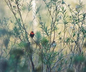BIRDS: Exotics