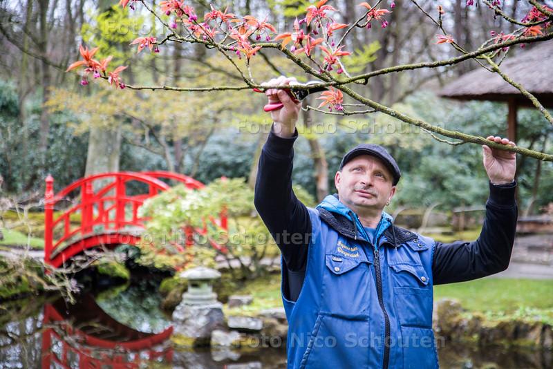 Tuinman Nelis in de Japanse Tuin van Clingendael - DEN HAAG 22 APRIL 2015 - FOTO NICO SCHOUTEN