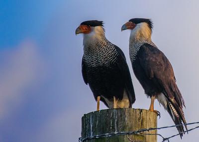 Everglades Birds Portfolio