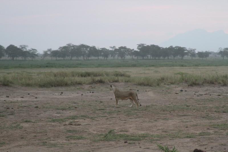Kenya 2019 #2 1684.JPG