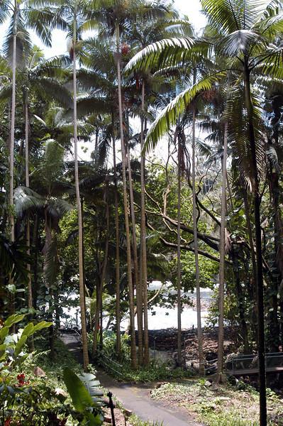 190- 20080410- Hawaii 15- Enroute to Hilo- Hawaii Tropical Botanical Gardens DSC_2808.jpg