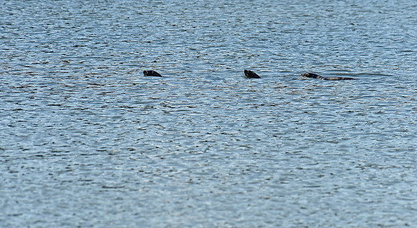 Jekyll Island Boat Tours - Epworth Otters 10-03-19