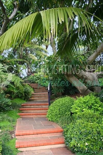 Palm Steps_batch_batch.jpg