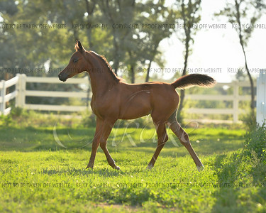 Renae's filly