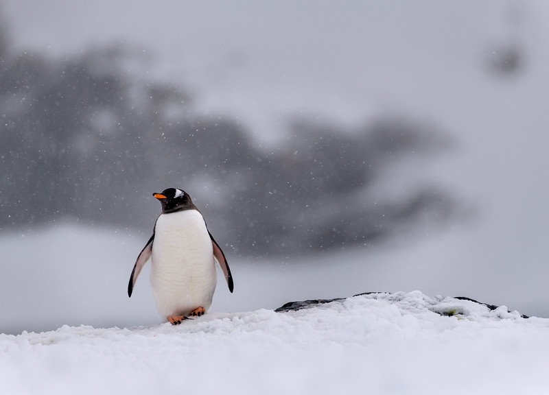 Antarctica-21025.jpg