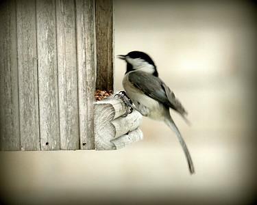BACKYARD BIRDS-BUTTERFLIES, CARDINALS,DRAGON FLIES, FLOWERS, HUMMERS, & SQUIRRELS