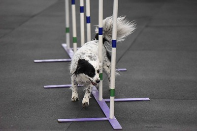 Greater St Louis Agility Club TDAA Trials - March 5-6, 2016