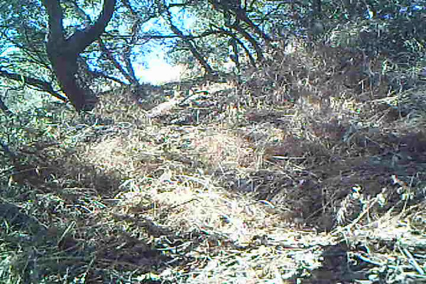 Coyote 824 AM.AVI