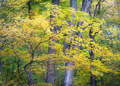 Maple Grove Forest Preserve