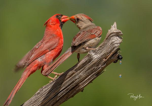 Cardinals x 2 3 LL.jpg