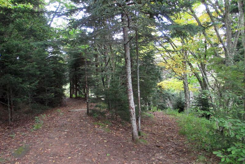 Ivestor Gap-Little East Fork Trail Junction -- 5,720'