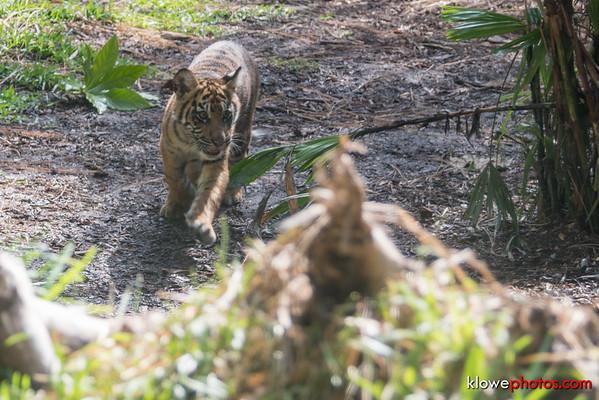 2016-07-07 San Diego Safari Park