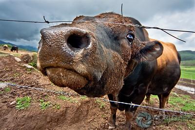Herd, milk & feed