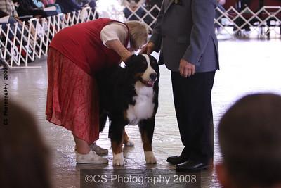 Amateur Owner Handler Dog-BMDCA 2009