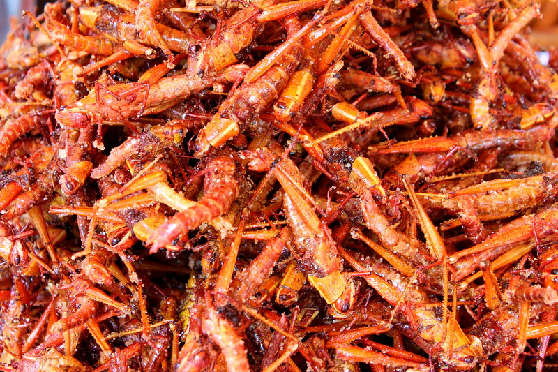 Fried and seasoned grasshoppers