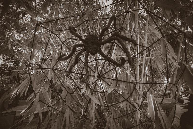 Halloween at the Barn House-34.jpg