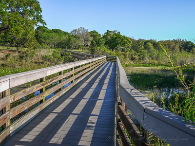 2016-03-30  Walk ways   Kapok Park  Clearwater,Fl.