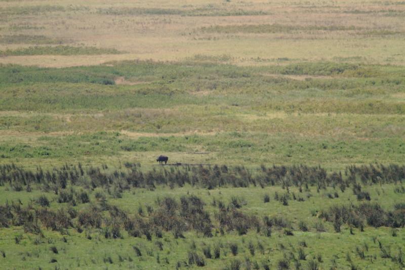 Rhino 1 (2).JPG