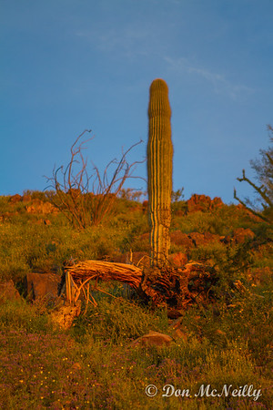 Dixie Mountain Trail Phoenix AZ 3-17