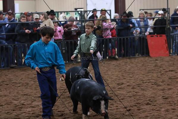 Swine 3
