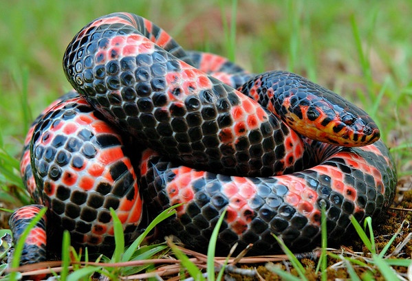 Southern Snakes