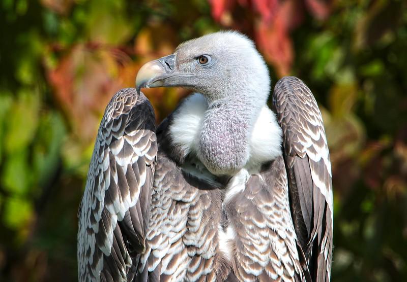 vulture_lowres.jpg