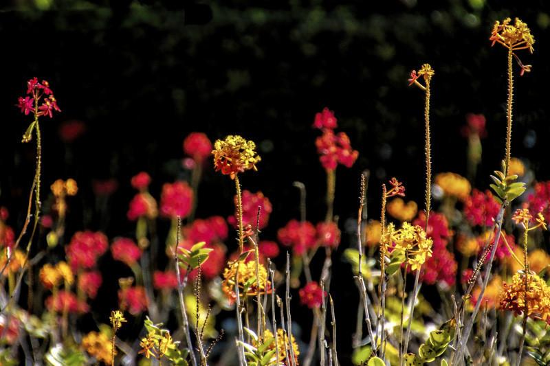 September 8 - Floral riot.jpg