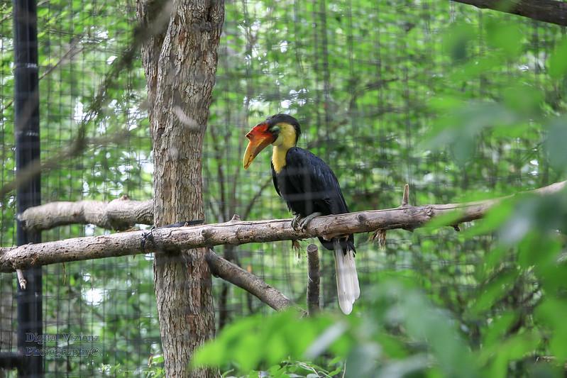 2016-07-17 Fort Wayne Zoo 652LR.jpg