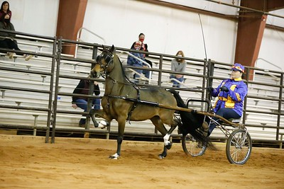 88.Roadster Pony Stake-Amateur/Jr.Exhibitor