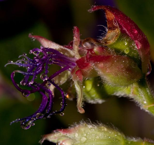 flowers-3444-Edit.jpg
