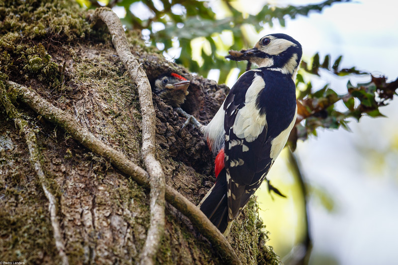 The Other Woodpecker Nest