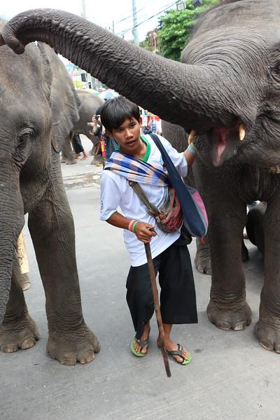 2014-11-14 Surin Elephant Welcome Feast 733.JPG