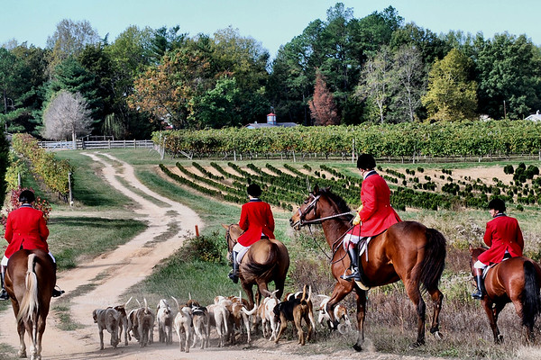 Commonwealth Fox Hounds 2007