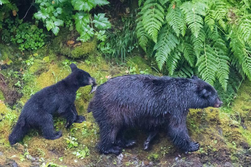 Alaska 2015 - Ketchican -  072815-198.jpg