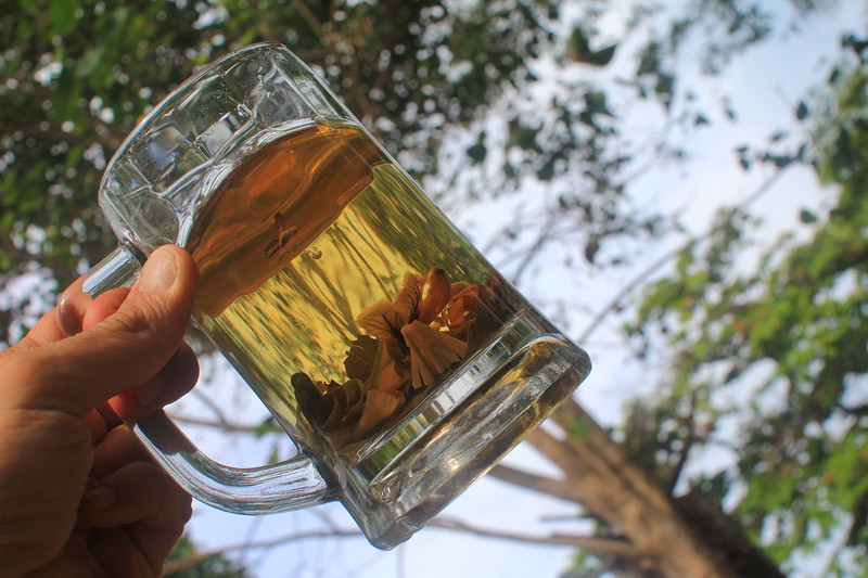 Herbal Tea Plants in glass