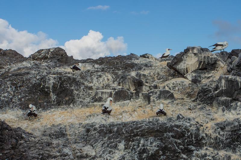 Nazca Booby nesting sites