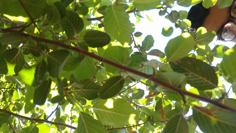 The lone tree(BEV)