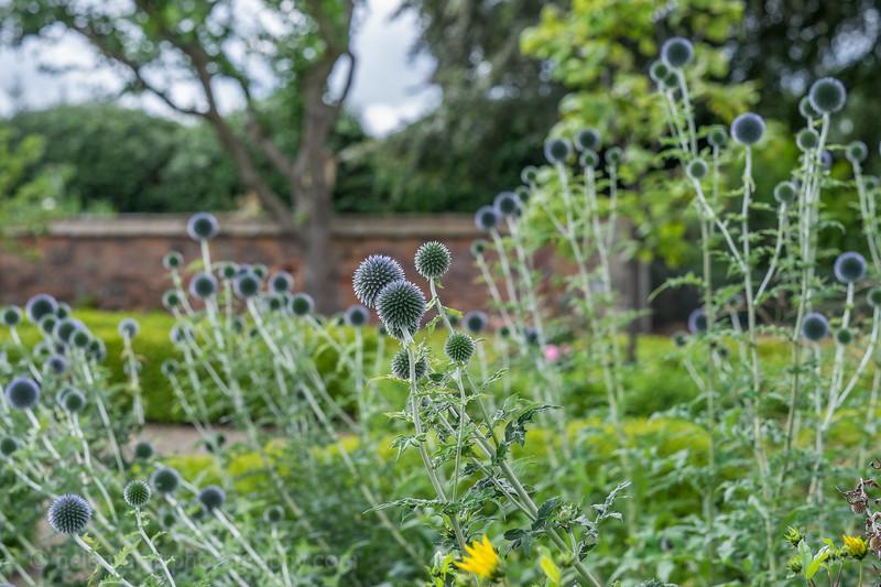 Hob Green garden-3.jpg