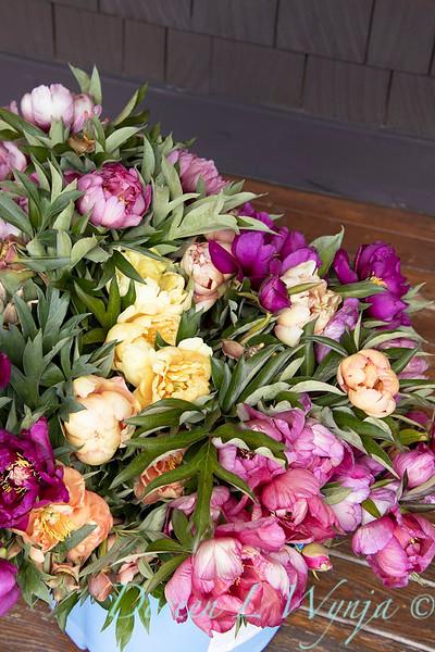 Peaonia - bucket of fresh cut peony flowers_0982.jpg