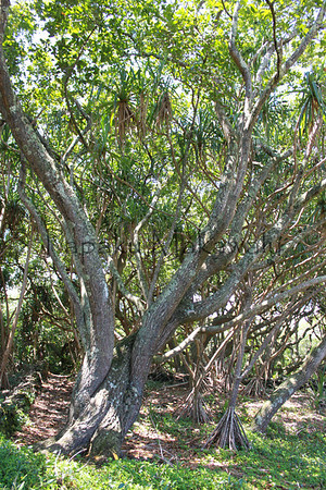 Kahuwai 2009