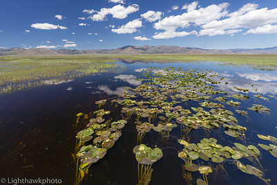 Feather River Land Trust / Northern Sierra Partnership