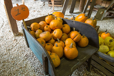 Sherman Pumpkin Farm